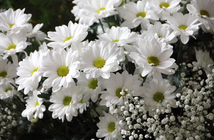 άνθη-φυτά-ρεπορτάζ-αγοράς