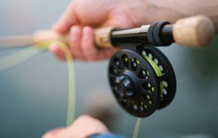 Αλιείας Είδη Αιδηψός